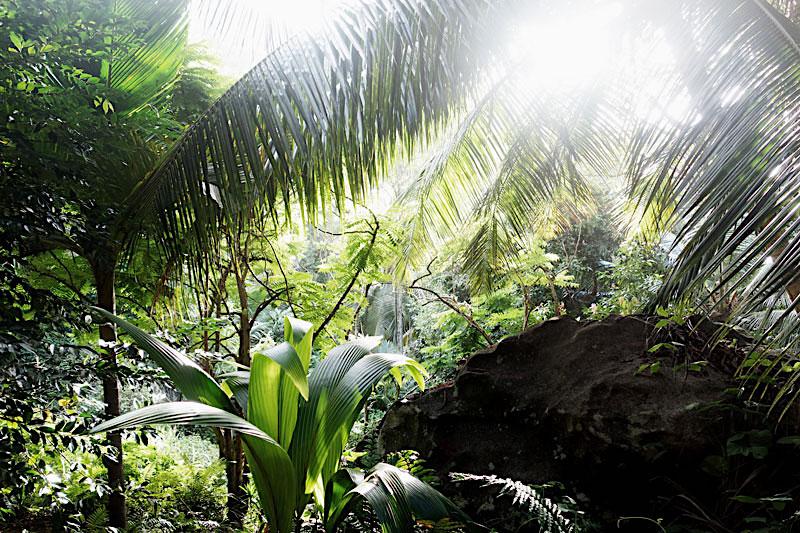 dschungel-seychellen