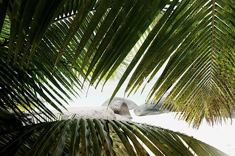 palmen-strand-silhouette-seychellen