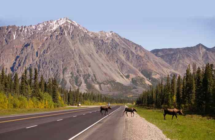 Safety tips for taking an Alaska road trip