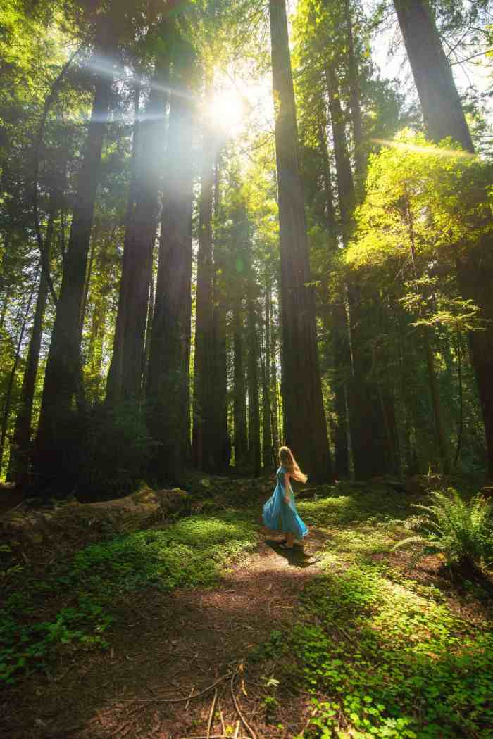 Visit Redwoods National Park in Northern California on a road trip | California redwoods | avenue of the giants | redwoods travel #california #redwoods