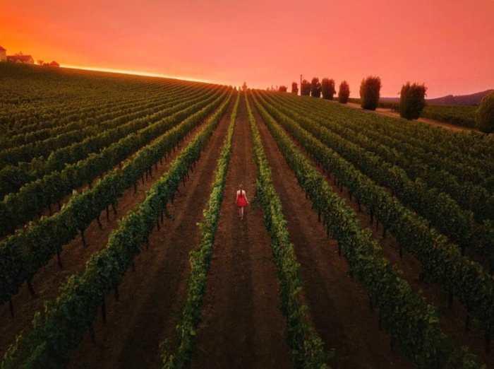 Sonoma County Wineries In Santa Rosa