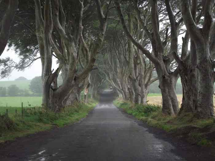 Game of thrones doors made out of dark hedges trees