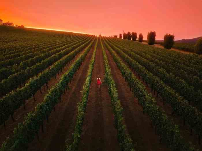 Relax And Sip Some Wine In The Willamette Valley during your Oregon road trip itinerary