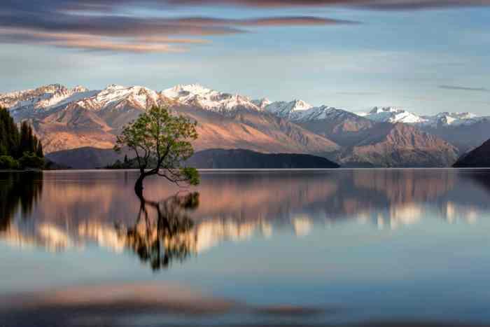 Wanaka Is The Most Popular Ski Town on New Zealand's South Island | Wanaka tree New Zealand