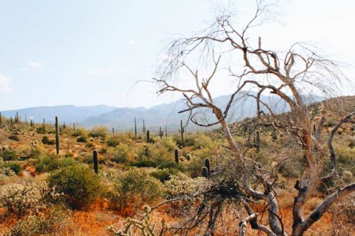 trees and cacti along Go John Trail on one of the best hikes in Phoenix