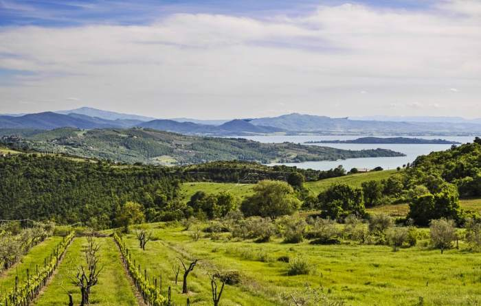 Lake Trasimeno is different than many other lakes in Italy - it's surrounded by olive trees and sunflowers