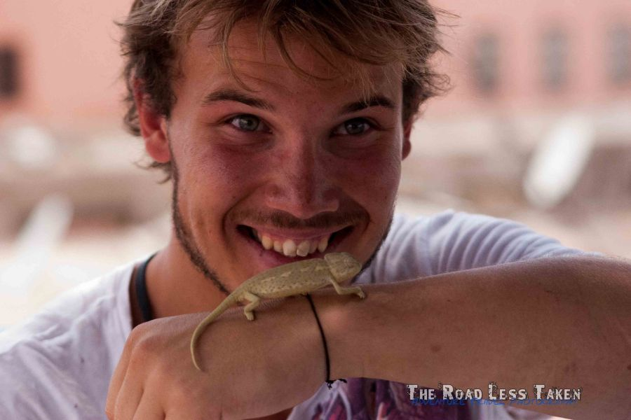 Chameleon, Marrakech