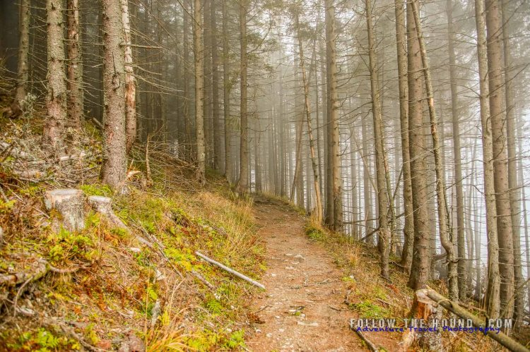 Tatras Mountains forest