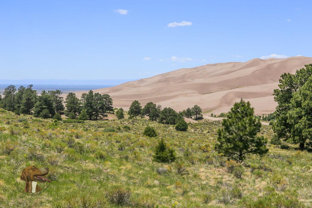 FTH - Sand Dunes National Park (20 of 37)