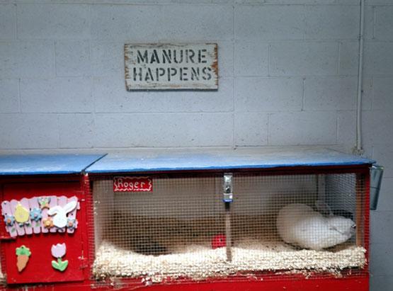 "Roger Rabbit, ""Manure Happens,"" Daggett Farm, Slater Park, Pawtucket, RI"