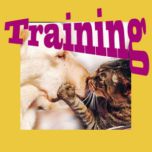 training veterinarians