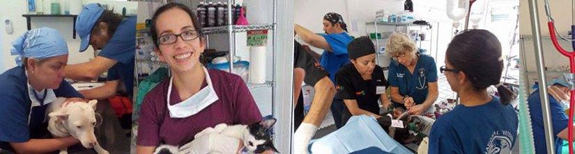 Alianza Manzanillo Sterilization Clinic Veterinarians