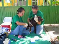 animal welfare includes treating venereal diseases