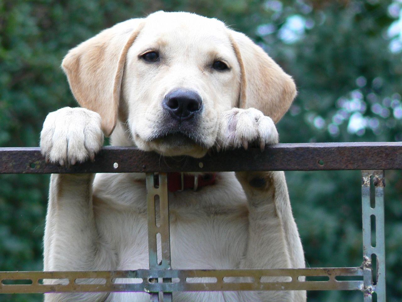chien en refuge animalier