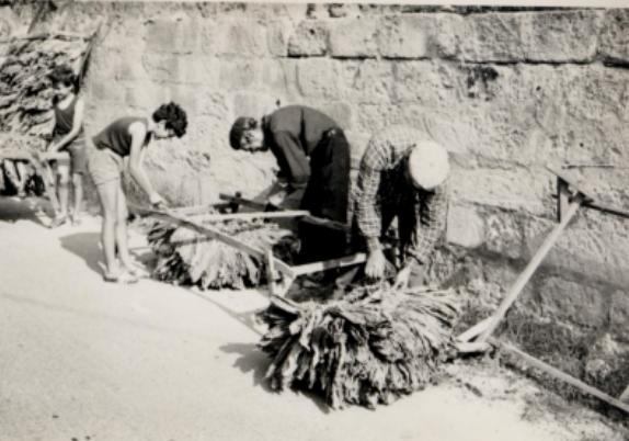 Calimera, 13 giugno 1960: il sacrificio di sei operaie, una tragedia annunciata (I parte)