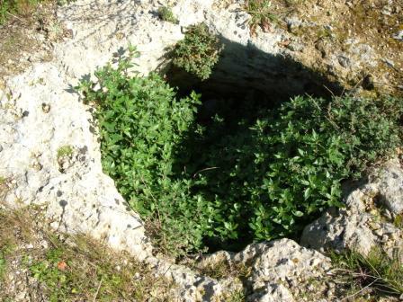 Fig. 5 – Il secondo pozzo della Masseria S. Elia alle secare