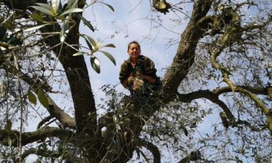 Giovanna sul trespolo dell'ulivo