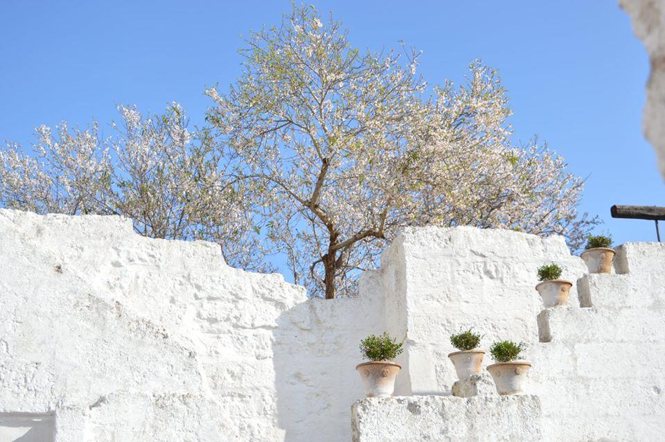 Masseria San Lasi… a Salve