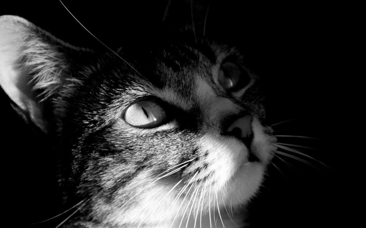 Resultado de imagen para gato en blanco y negro
