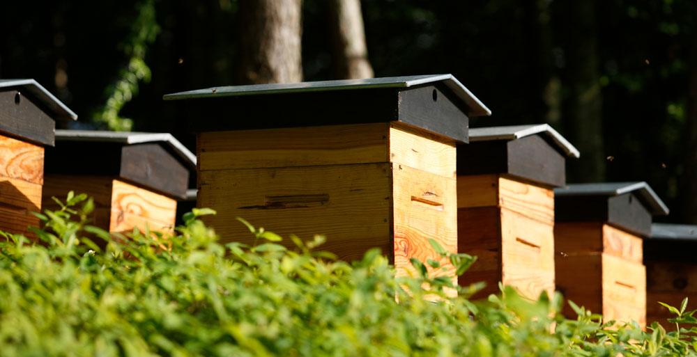 Les ruches de Fontevraud