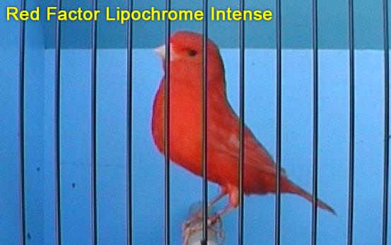 Red Lipchrome