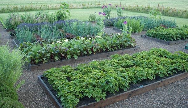 Raised beds in the kitchen garden