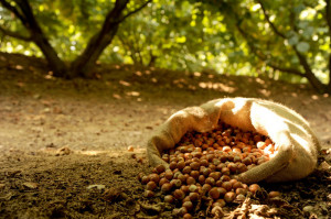 nocciole-hazelnuts-from-piedmont