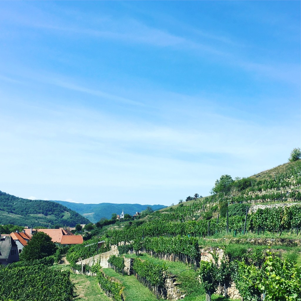 Good 2017 for Austrian wine despite problematic weather