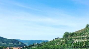 Good 2017 for Austrian wine despite problematic weather