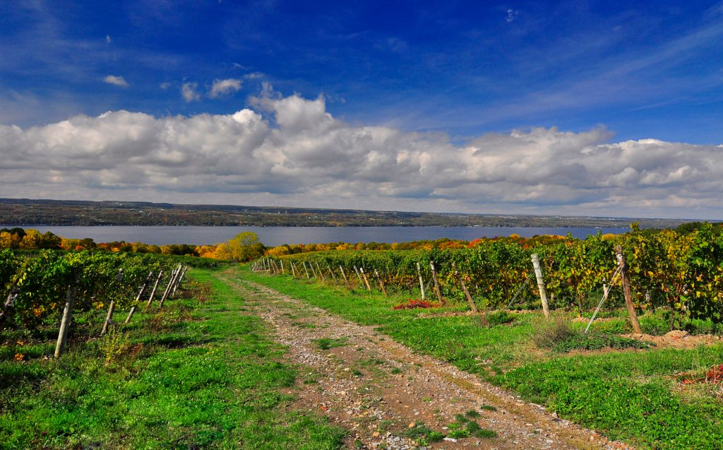 Finger Lakes wine region named best wine region by USA Today