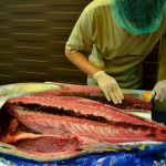 General Santos City: The Best Tuna Capital of the World