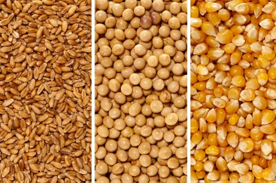 U.S.D.A. lowers 2020 wheat carryover forecast