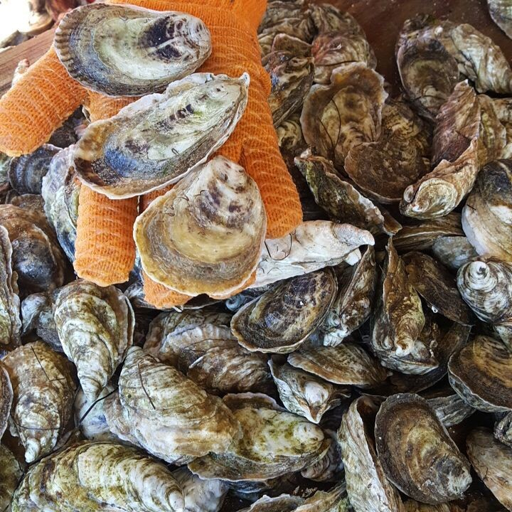 Cultured Seafood Festival In New Bern Nc Food Diary Of A