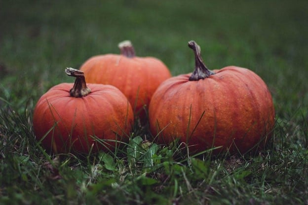 Award-winning pumpkin recipes