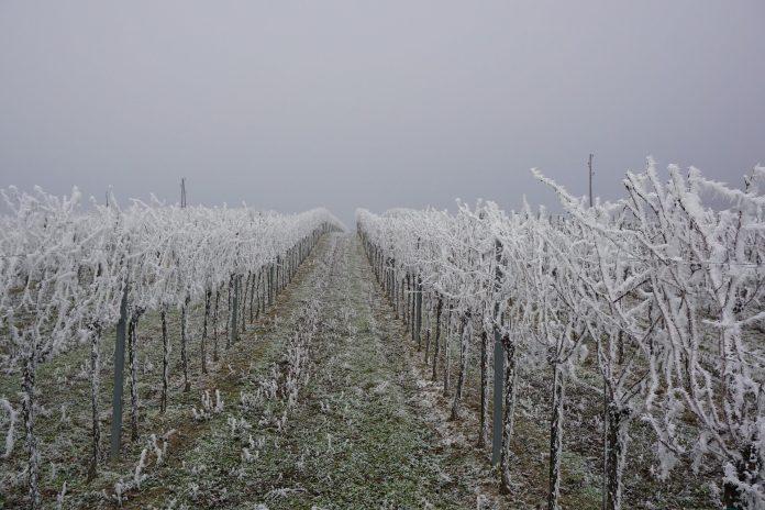 vineyard 2955442 1920