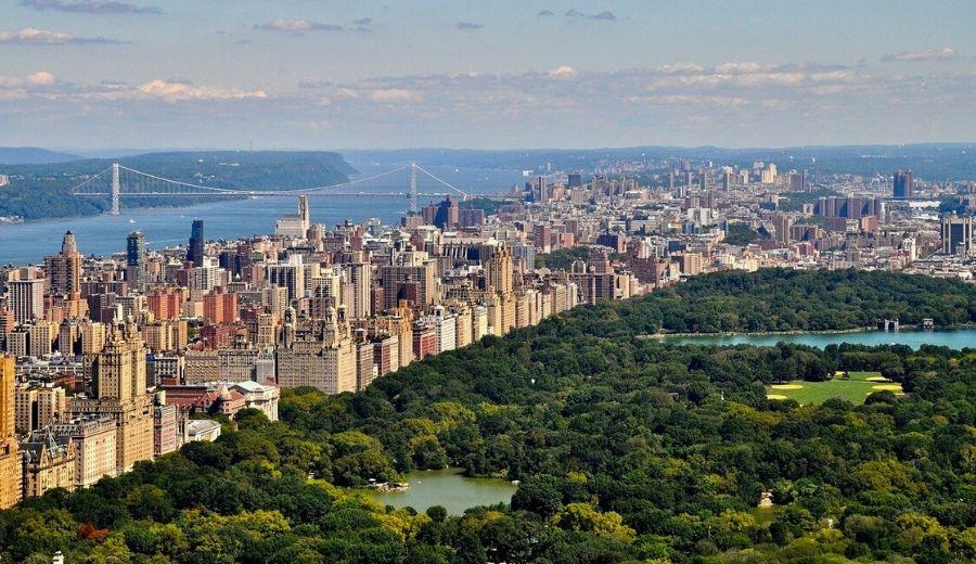 tree city nyc