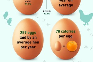 Egg Facts