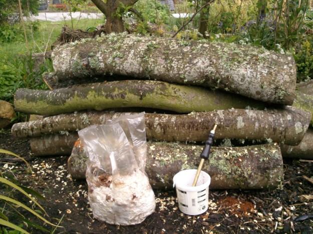 logs and shiitake spawn