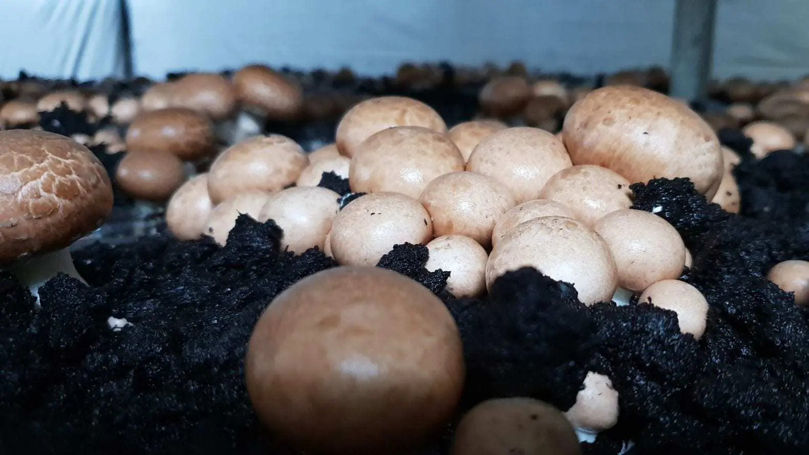 Weird mushroom facts we bet you didn't know - FoodForMzansi