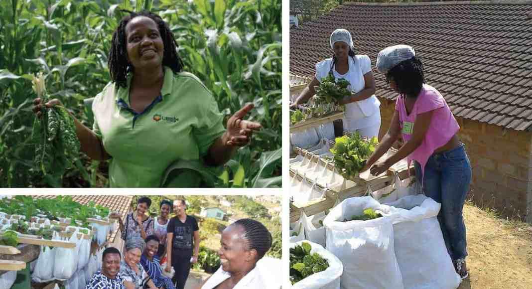 Nonhlanhla Joye, the founder and director of the Umgibe Farming Organics and Training Institute.