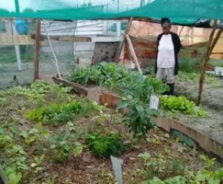 Buyiswa Mayekiso pictured in her home garden in Greenpark, Mfuleni.