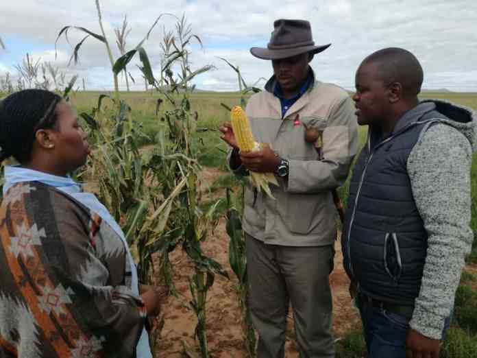 Together with young agri mentors Sinelizwi Fakade (middle), helps emerging farmers in the Eastern Cape. Here pictured with him is junior mentors Sinegugu Ndamase (left) and Mawande Bango (right).