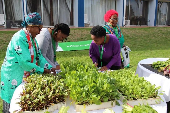 Standing up for small-scale farmers, the Support Centre for Land Change (SCLC) is currently operating in the Western Cape and Eastern Cape. The organisation helps farmers engage with government as well offer training and encourage the use of sustainable farming methods.