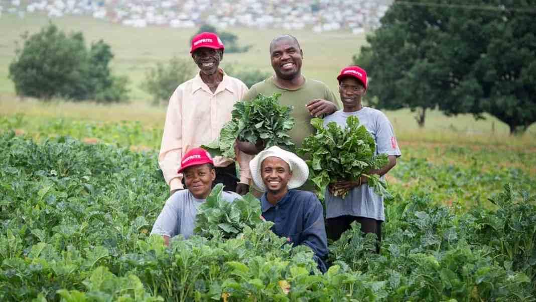 Ntirhisano Farmer' Cooperative grows African indigenous vegetables In Lenasia, south of Soweto in Gauteng. Front- Esther Mopeli; Justin Morrison; Back- Emmanuel Moyo; Peter Moyo; Sibongile Khabo