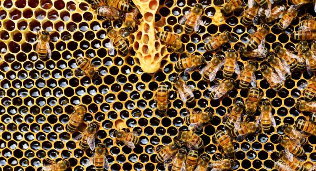 Mzansi desperately needs a traceability system to protect consumers from the risk of adulterated honey, and ensure the quality of the honey being imported.