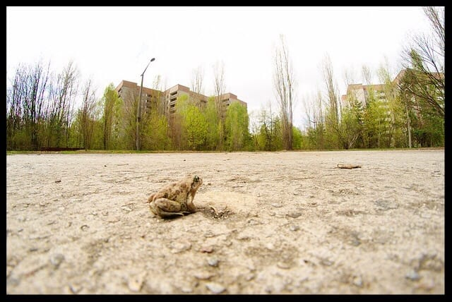 little frog friend pripyat