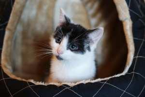 cleo cat kitty foodie explorers