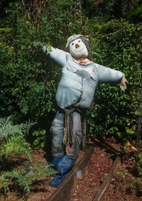 allotment scarecrow