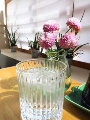 harajuku kitchen gin