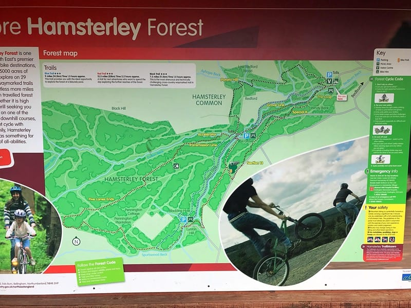 hamsterley forest durham great outdoors